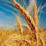 کارخانجات تولید آرد، مشتریان آینده پلاسما