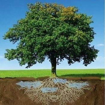 حل مشکل آبیاری در کشاورزی با سوپر جاذب نانویی