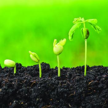 کشاورزی، صنایع غذایی و بسته بندی