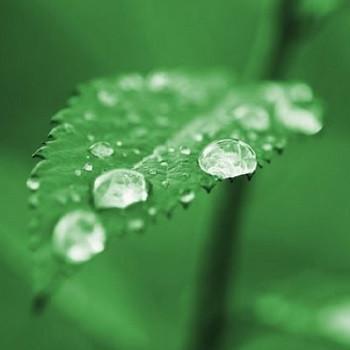 تولید نانوکامپوزیتی برای کاهش تبخیر و تعرق گیاهان