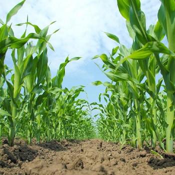 فناوری نانو چگونه میتواند تنش محیطی را در محصولات زراعی کاهش دهد؟