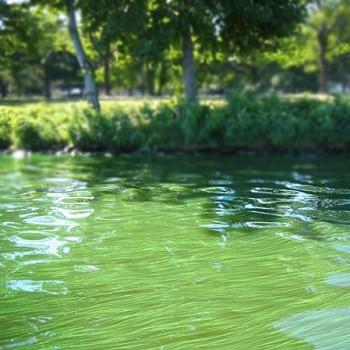 آیا فناوری نانو میتواند عامل اصلی در آینده دریاچههای تمیزتر باشد؟